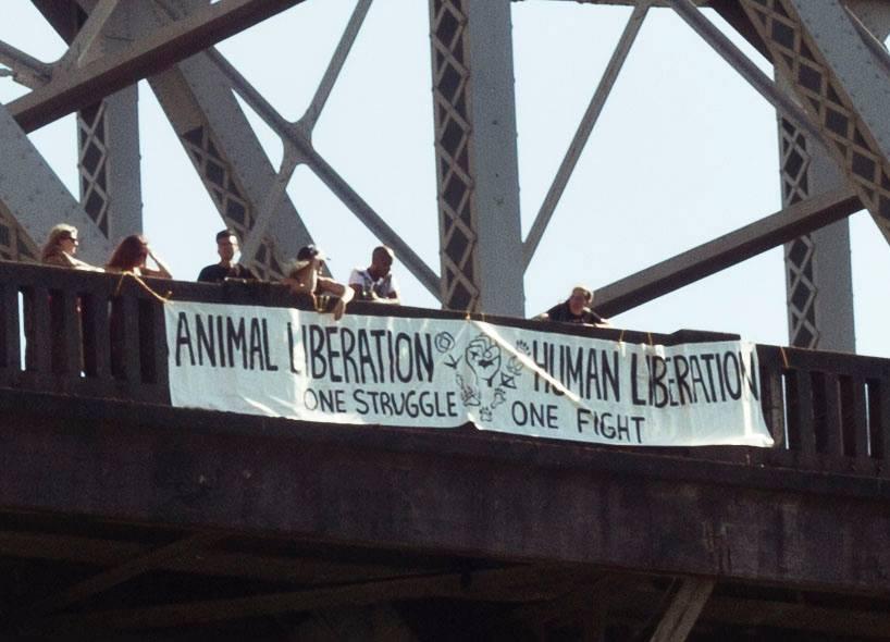 Bec wonders Animal Liberation