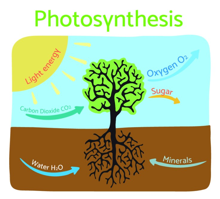 photosynthesis_03