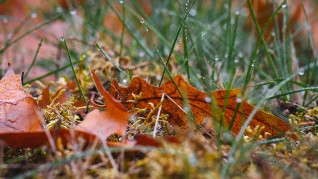 Herbstblatt / Autumn Leaf