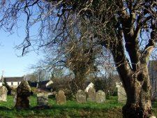 diseased-tree-and-graveyard