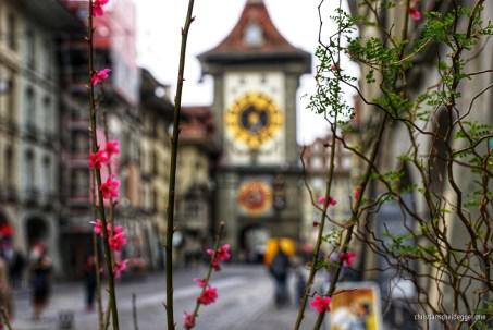 Frühling in Bern