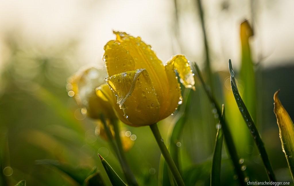 Frühling im Lockdown