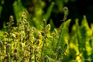 Unfolding Fern