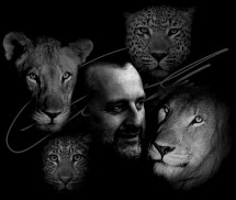Lions and Leopards On My Mind - SIG