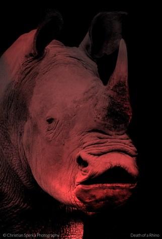 Death of a Rhino CSP 4