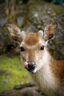 Lick @ Tierpark Arth-Goldau