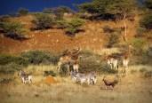 Multiple species at the Spioenkop Game Reserve