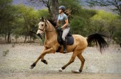 The of cantering ...