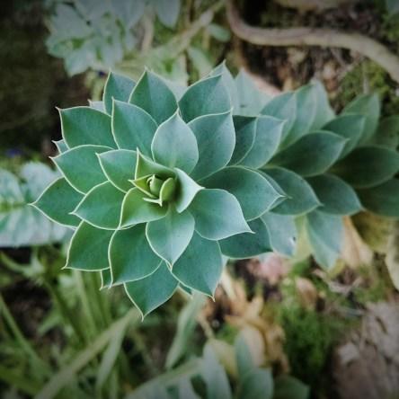 Prickler plant, UNC Botanical Gardens