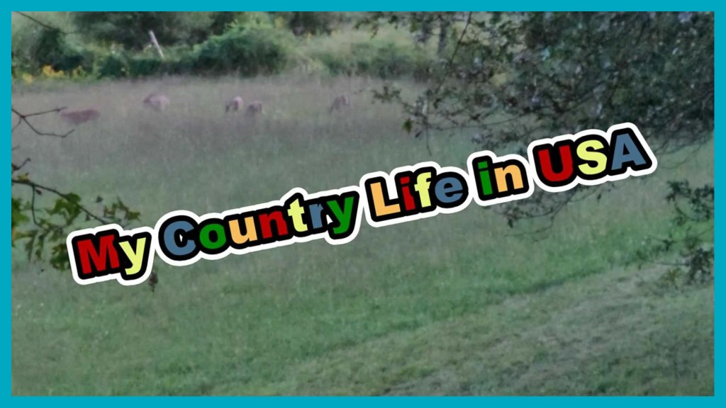 The Deers Came to Visit!