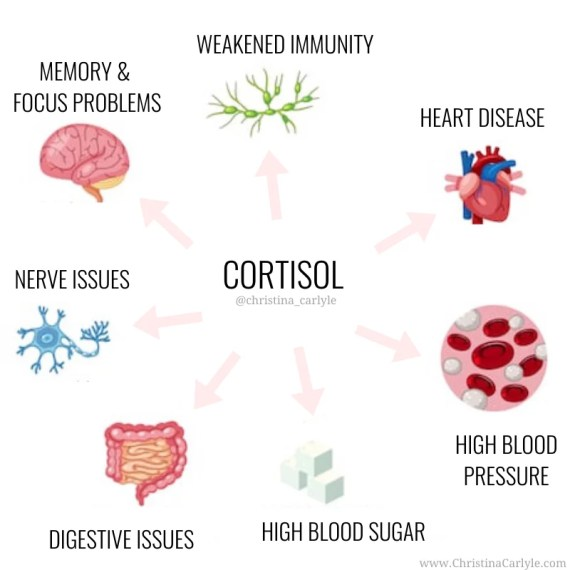 The different body functions that cortisol directly affects in a negative way