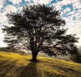 Nature of Inner Beings