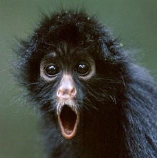 Mindfulness to train the monkey mind