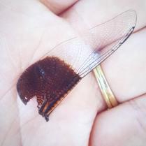 dragonflywing