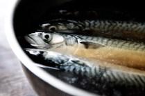 Makreller-i-saltlage