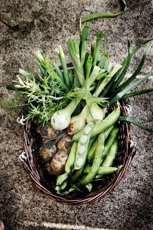 Friske-kartofler-spidskål-valske-bønner-løg-egen-avl