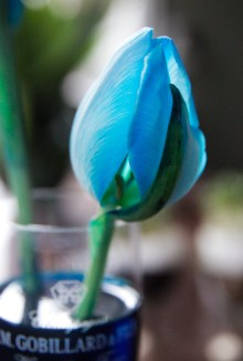 vinterferie-med-born_projekter_farvede_tulipaner_osmose_-blomster_christinadamgaard-com