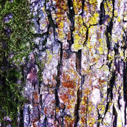 Tree, moss, and lichen in Grandview Park, Vancouver - 2012
