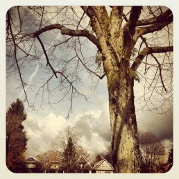 Grandview Park - Vancouver - February 2012