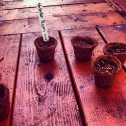 Planting - May 2012