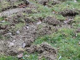 wild boar damage: http://upload.wikimedia.org/wikipedia/commons/2/27/Schweinerei-einer-schwarzkittelrotte-001.jpg