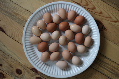 local eggs