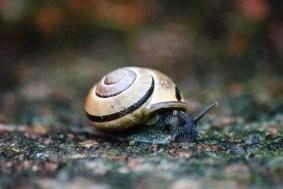 Snail in rain
