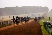 On Newmarket Gallops - training ground for the world's finest racing horses.