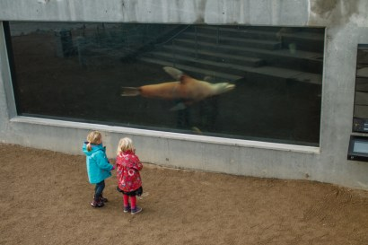 Small girls admiring the sea lions at Denmark's Aquarium.
