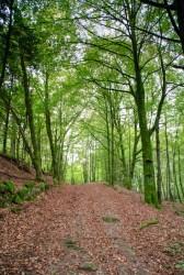 I skogen vid Hovdala slott. / In the woods by Hovdala castle in the autumn of 2014.