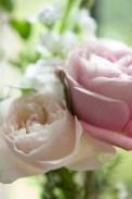 rose28May2015_0350