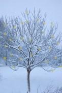 98_winter_tree_baubles