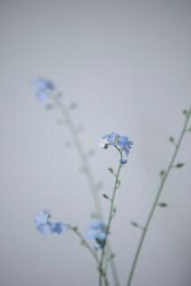 blueflower_0019