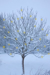 98_winter_tree_baubles