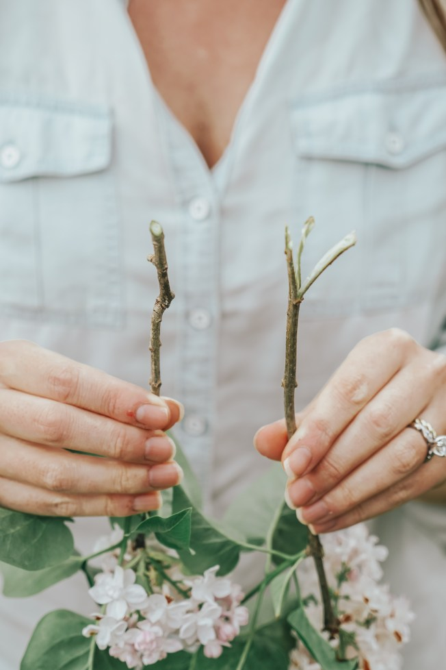 lilac tips - woody stems