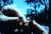 Sapphires03