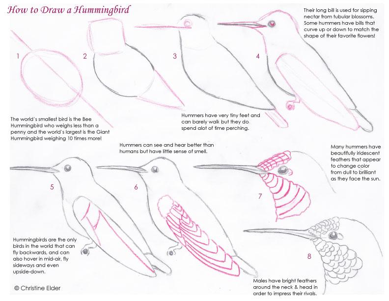 hummingbird diagram of color cat5 home network wiring bird sketching tutorials download this tutorial pdf