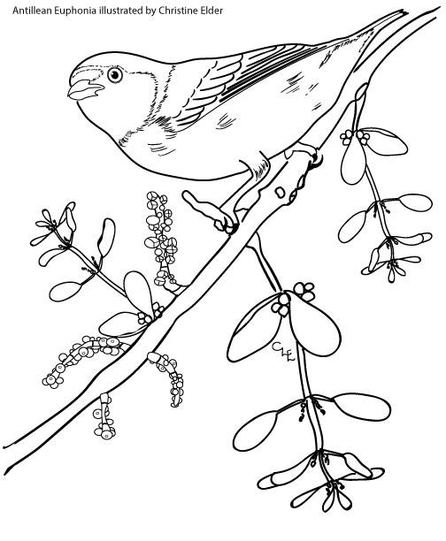 Caribbean Birds Coloring Book
