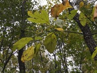 For October 22 Blog 1