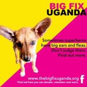 The Big Fix 3