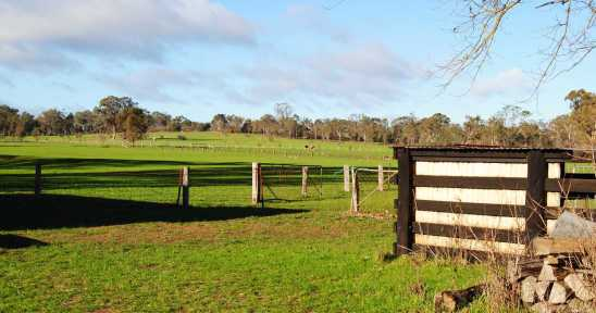 cows and kangaroos scenery