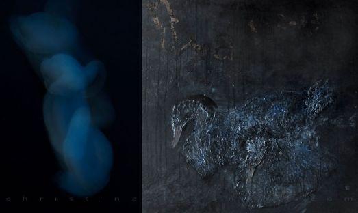 Sauvages! 90cm x 150 cm. Dyptique, mixte sur bois et photographie scellée sous verre acrylique. 2012. Projet