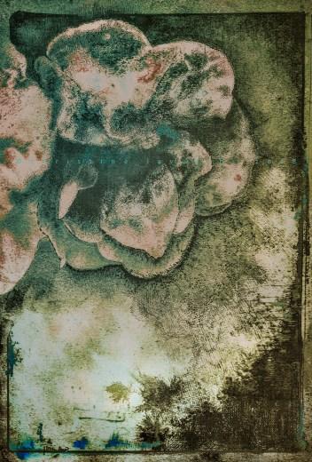 plume et encre sur cyanotype sur papier détrempe, virage au thé, encaustique, 2018.