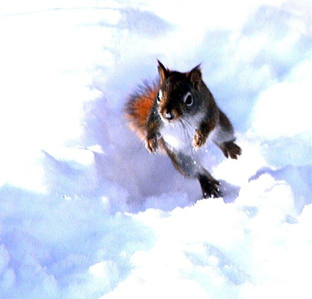 Squamish Olympic Spirit Amp A Running Squirrel Canvas And