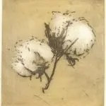cotton-pairs-i-2002-colour-etching-7-5x8cm-christine-porter