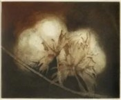 two-bolls-2005-multiplate-colour-etching-28-5x27cm-christine-porter