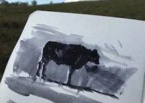 wagyu-sketch-watercolour-on-paper-15x15cm-by-christine-porter-collection-of-the-artist