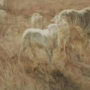 """Christine Porter """"Lamb"""" watercolour. A large lamb with a ewe and another lamb. Strong sunlight, yellow grass."""