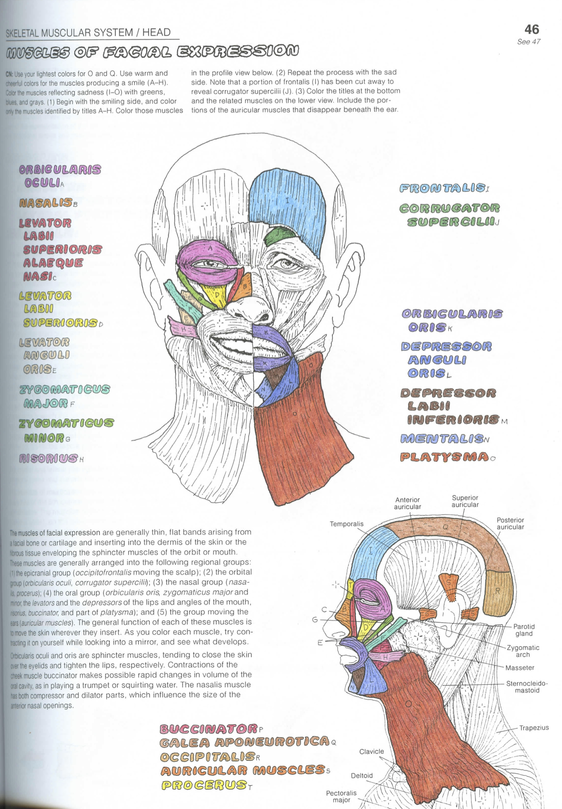 What S Up With Your Face Or Anatomy Scans 1 0