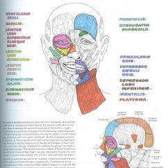 Muscles Of Facial Expression Diagram Er For Customer Relationship Management Anatomy Coloring Book Wynn Kapit Page